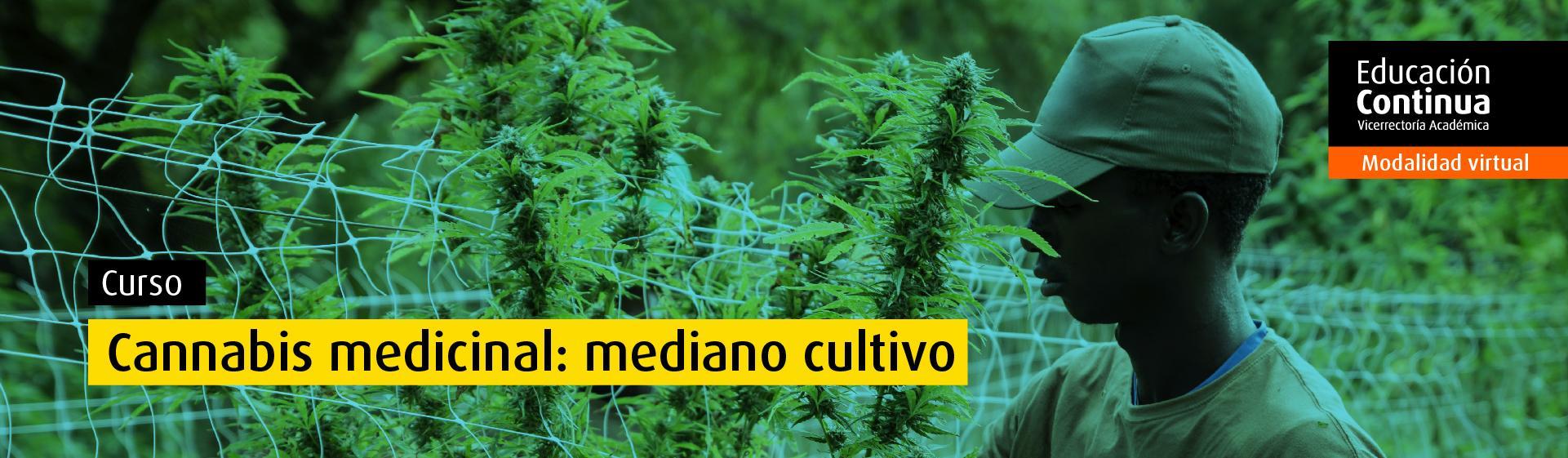 Curso Abierto: Cannabis medicinal: mediano cultivo ingeniería química alimentos uniandes