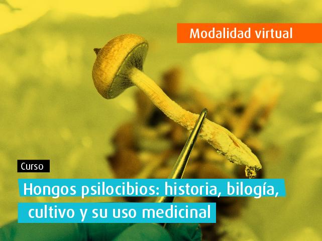 Curso Abierto: Hongos psilocibios: historia, biología, cultivo y uso medicinal ingeniería química alimentos universidad de los andes